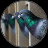 Spazio per ogni colombo